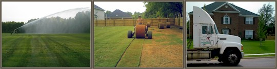 From our local sod farms to your property, we deliver and install our sod
